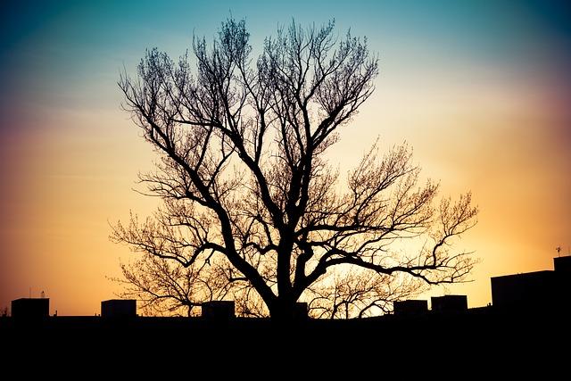 sunset-4974687_640